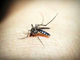 Olejki eteryczne odstraszające owady